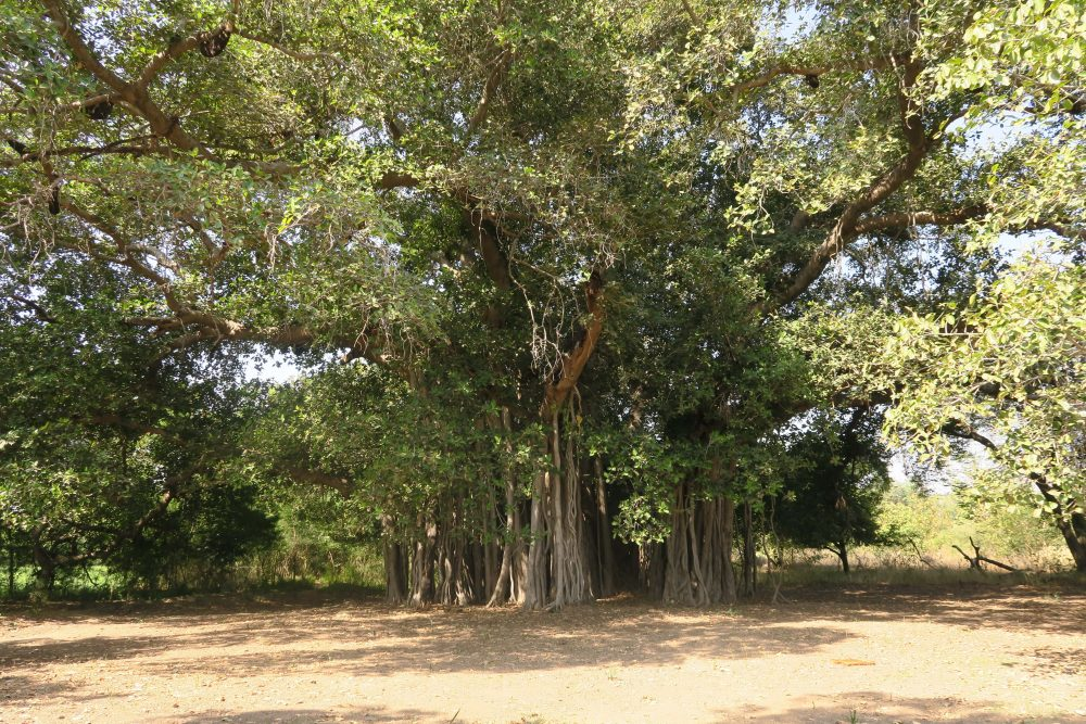7. Village Visit_Tree-min