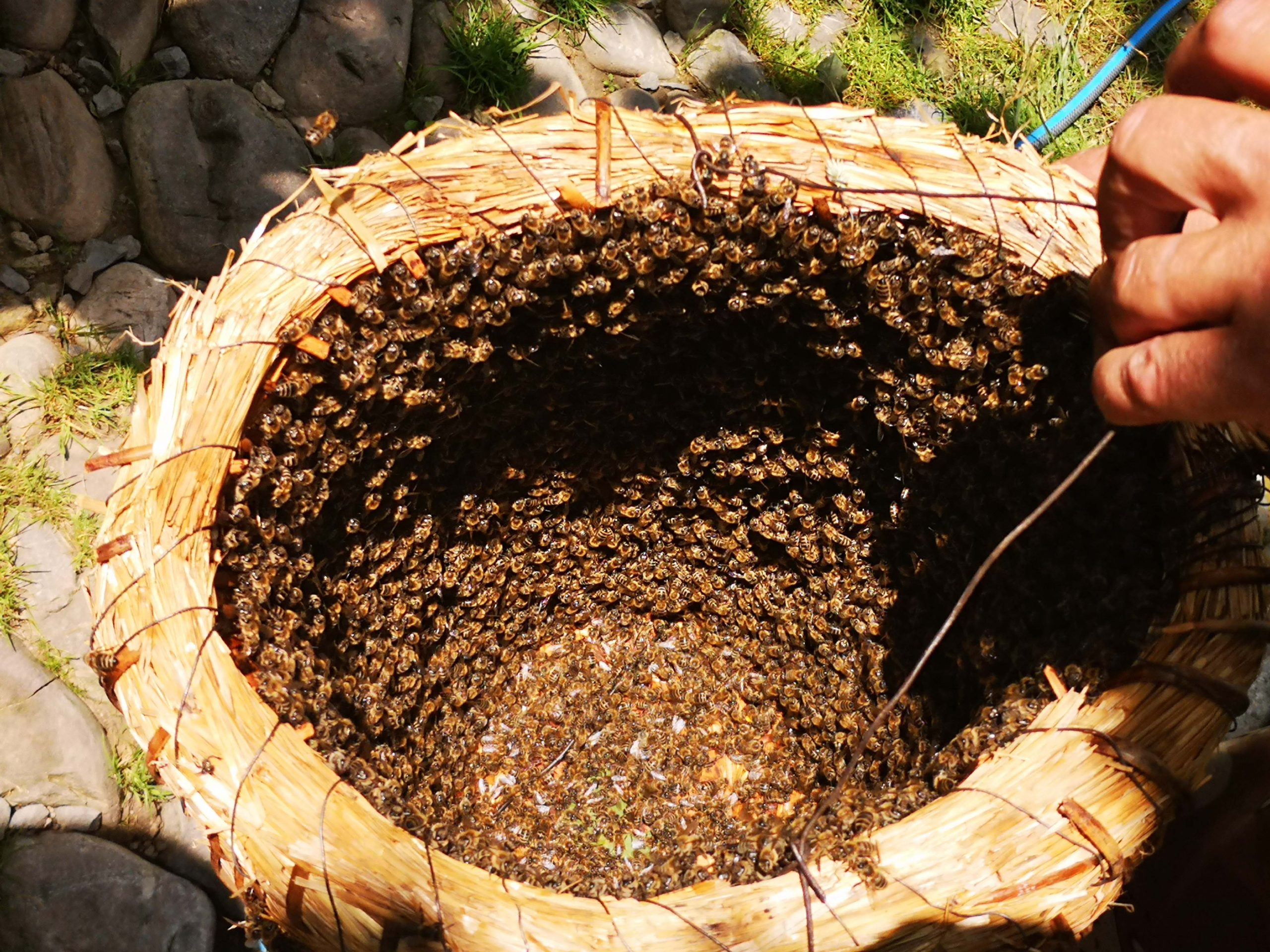 Meeting the British Royal's Bee Keeper in Transylvania