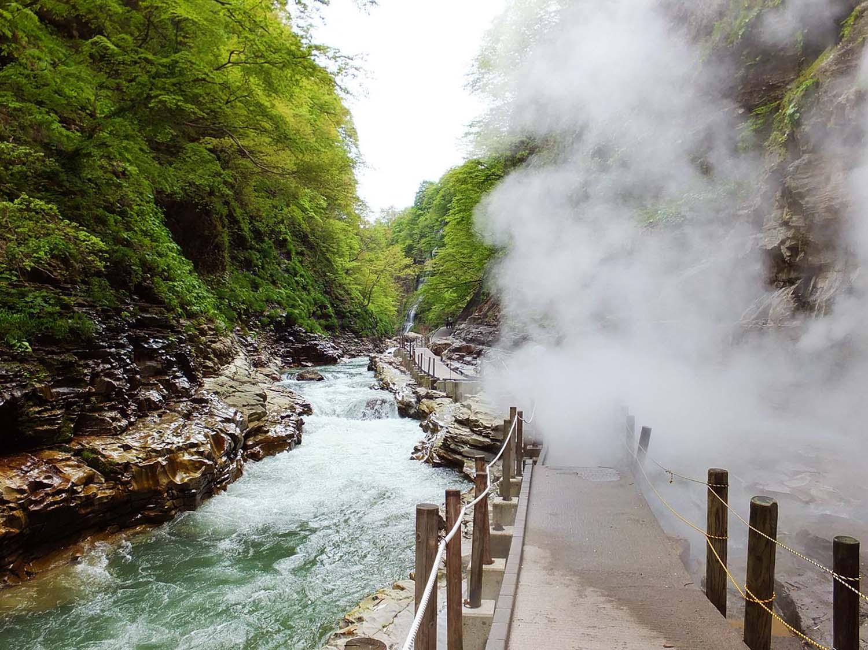 Trekking in the Yuzawa Forest