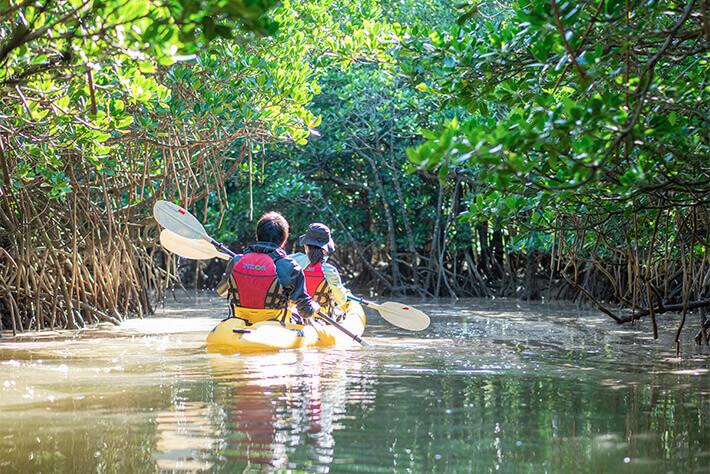 Kayaking the Iriomote Jungle