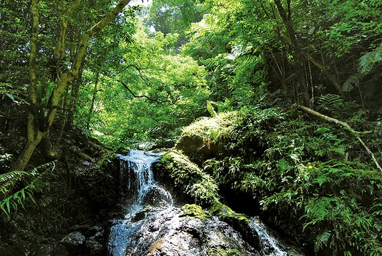 Yambaru National Park