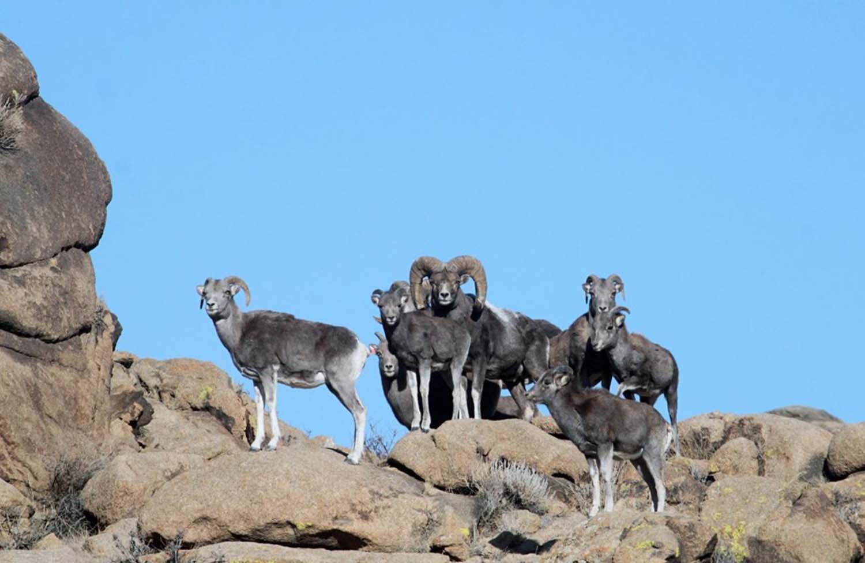 Trek to Spot the Local Wildlife