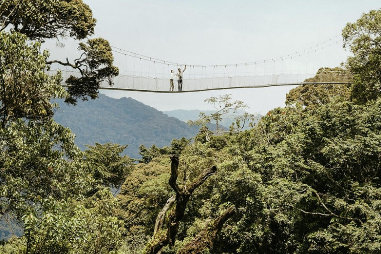 Forest Canopy Walks