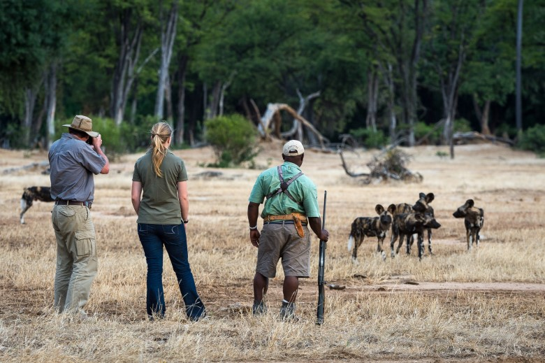 Walking with the Painted Wolves of Mana Pools
