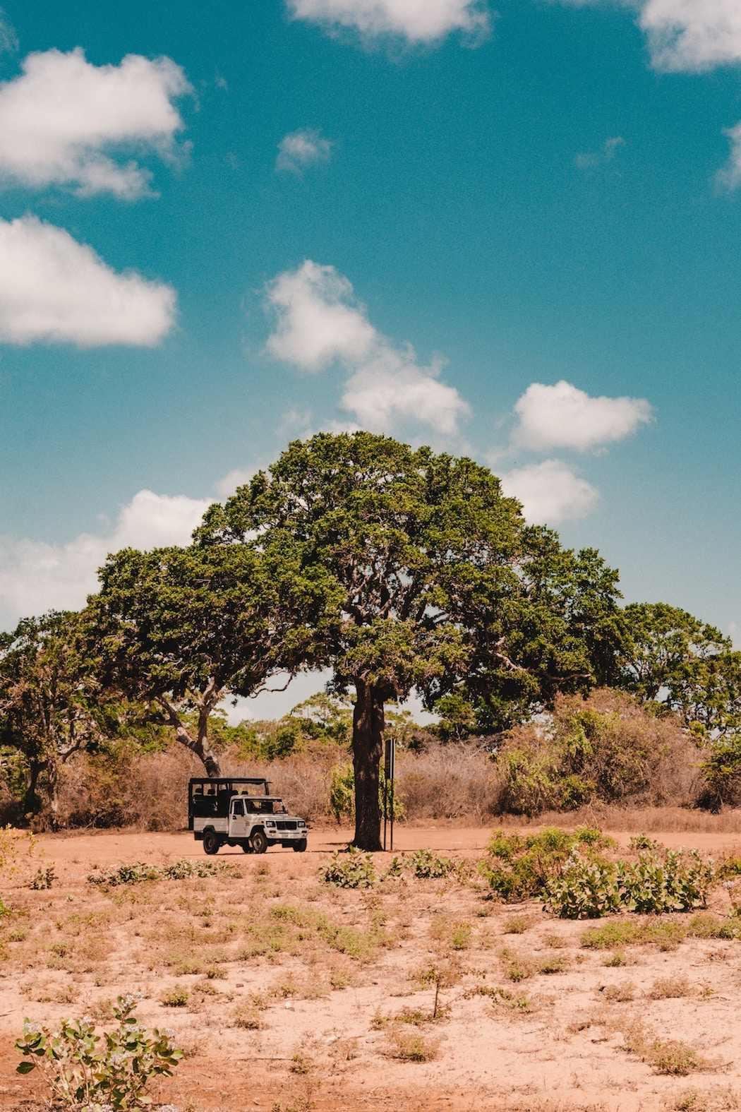 Game Drives in Yala