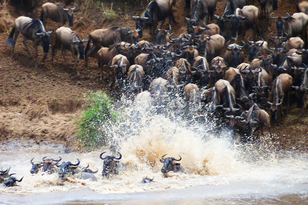 Crossings at Mara River