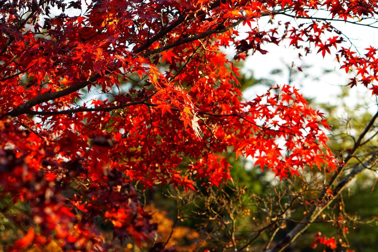 Hiking the Mitarai Valley in Fall