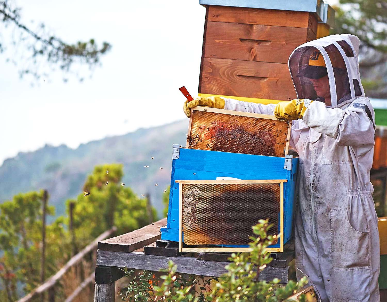 Visit a Honey Farm
