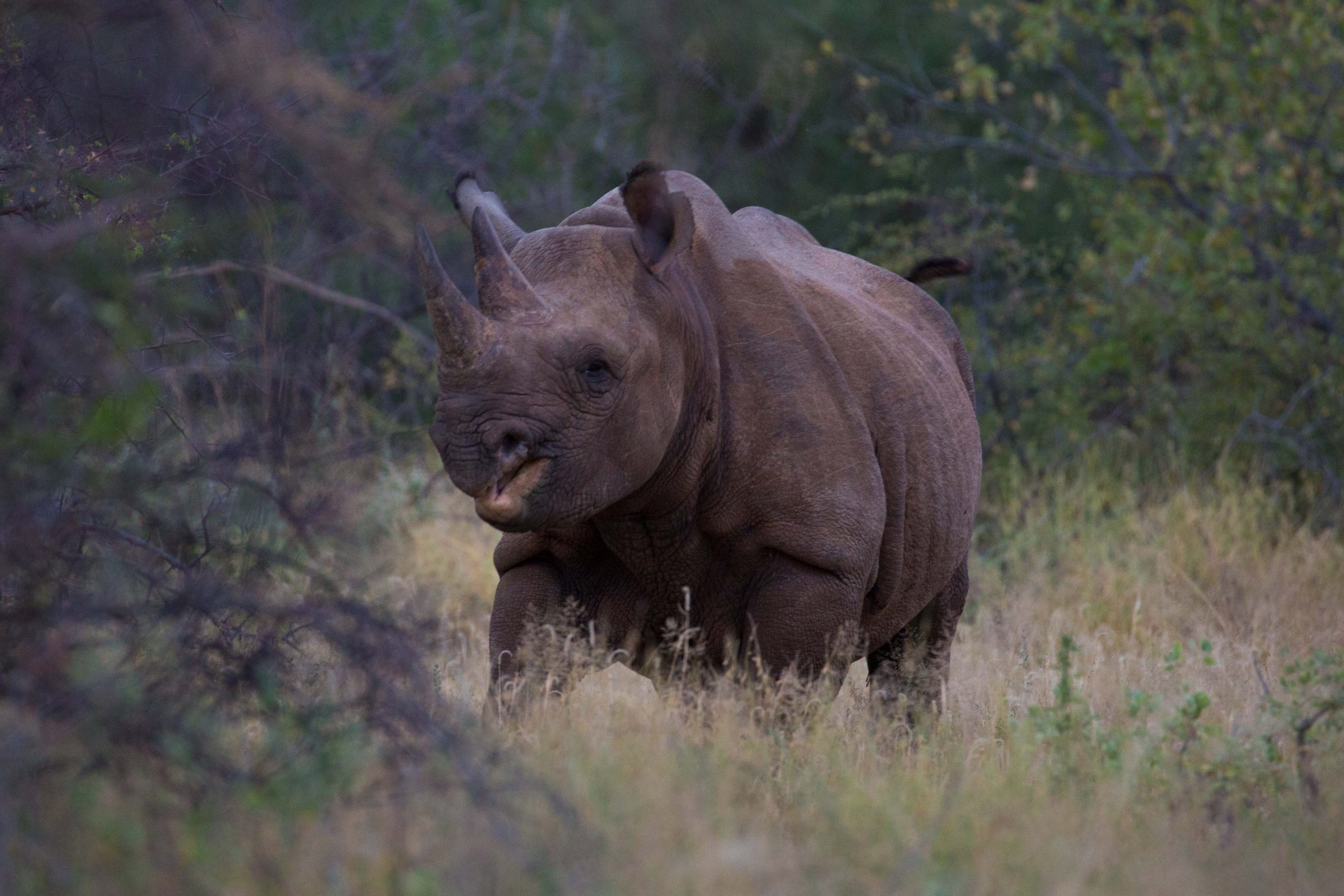 Tracking Black Rhino