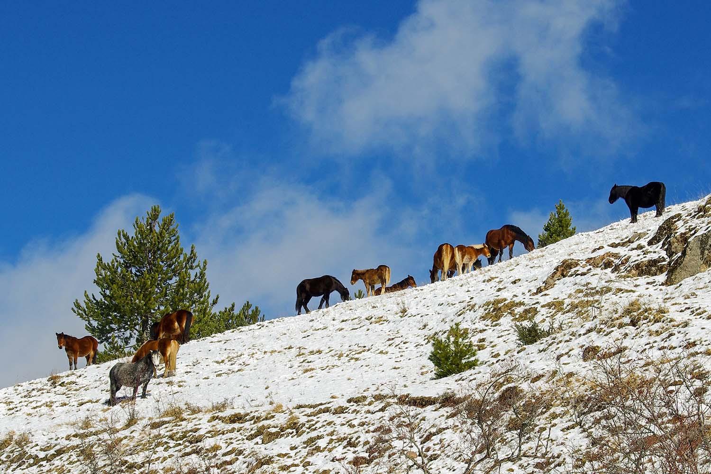 Biking, hiking or horseback riding in the Gran Sasso National Park