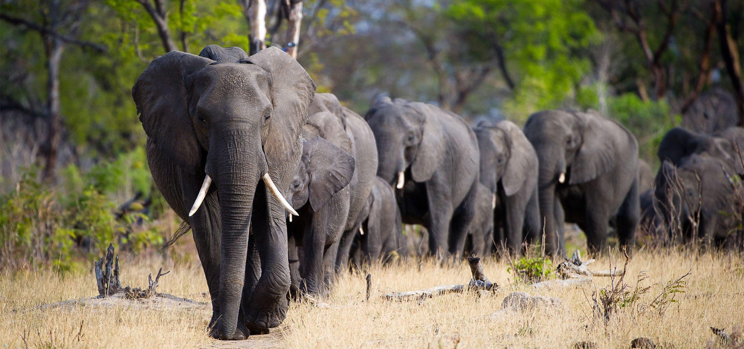 Zimbabwe - Hange National Park