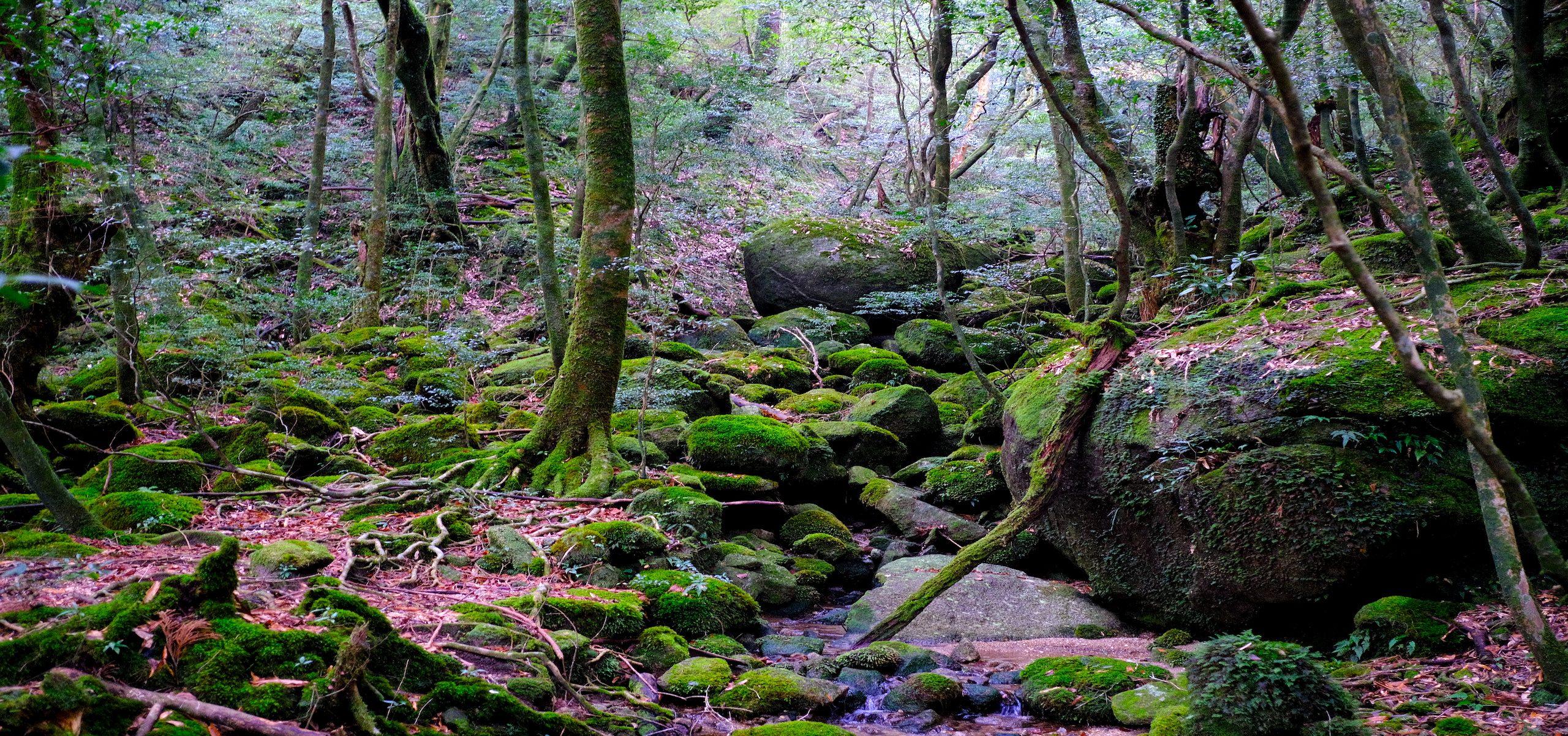 Japan - Yakushima