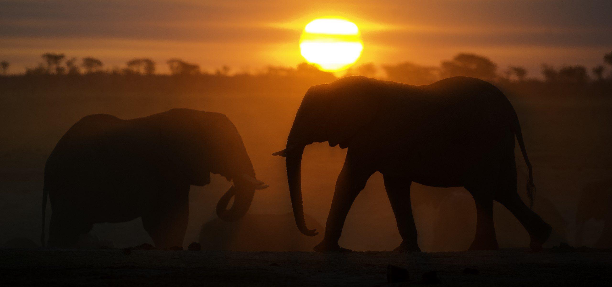 Zimbabwe - Hwange Sunset