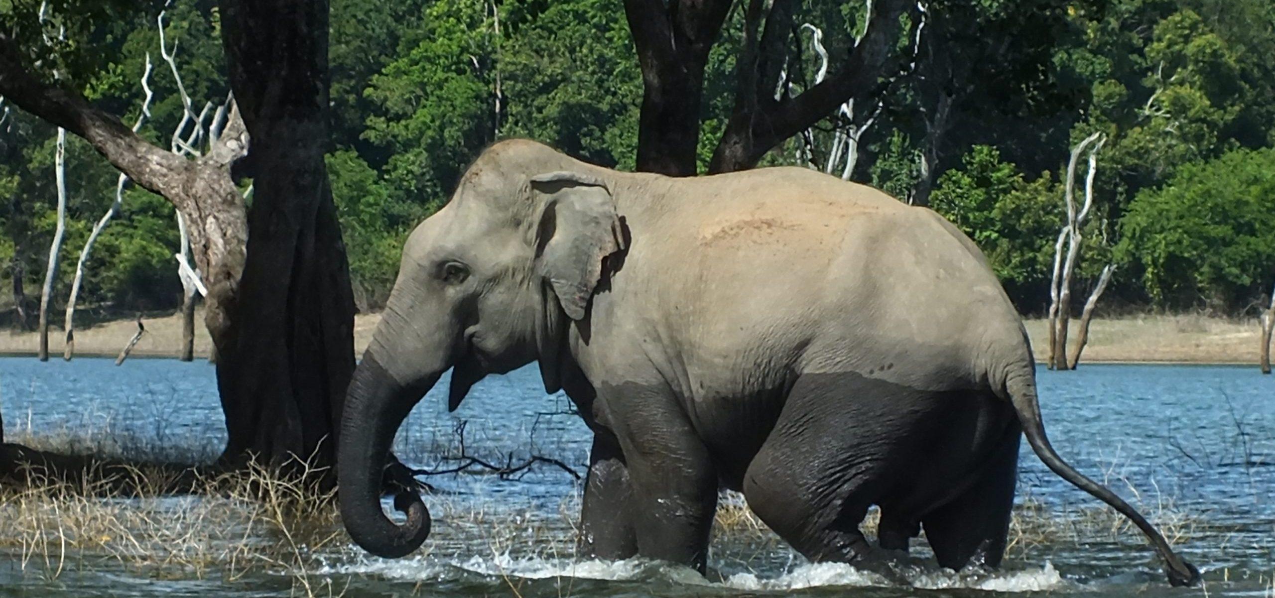 Sri Lanka - Gal Oya