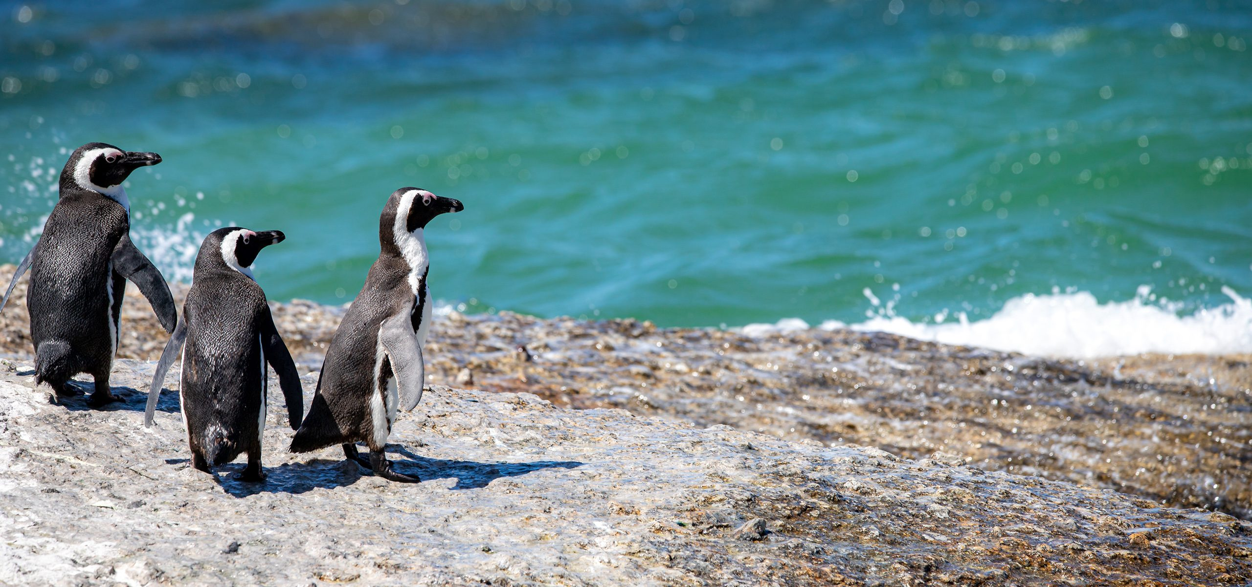 South Africa-Penguins