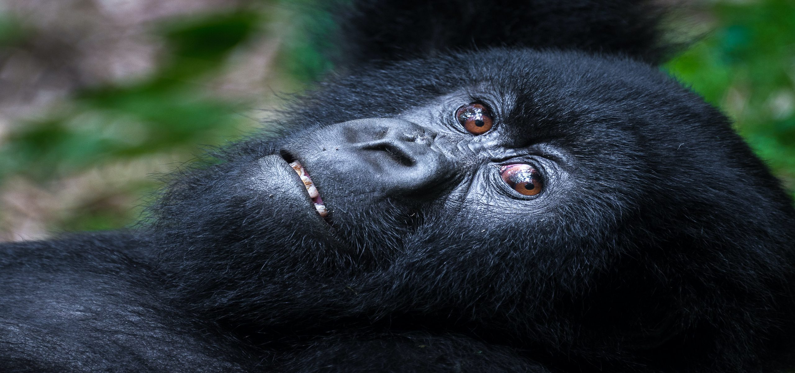 Rwanda - Bisate